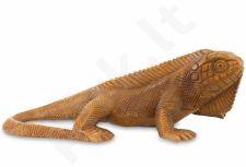 Iguana 109059