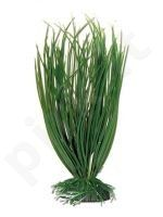 Plastmasinis augalas ACORUS didelis