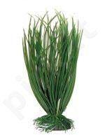 Plastmasinis augalas ACORUS mažas 10cm