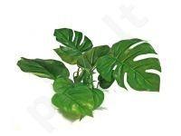 Plastikinis augalas ANUBIAS 20cm