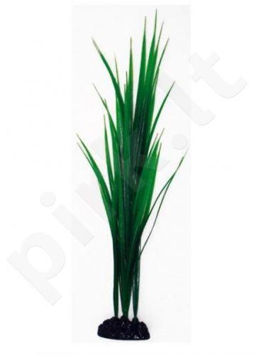 Augalas BAMBOO labai didelis