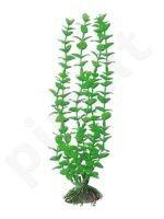 Plastmasinis augalas ROTALA vidutinis