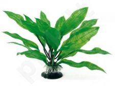 Augalas plant Classic ECHINODORUS MD