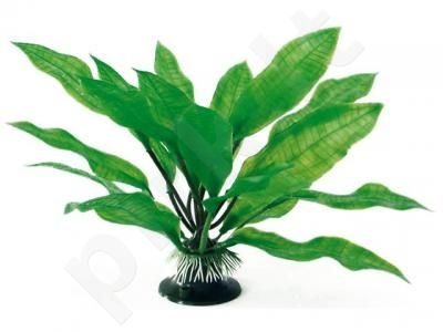 Augalas plant classic ECHINODORUS LG