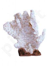 Dirbtinis koralas BEAUTY 3