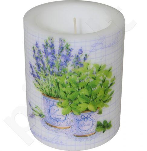 Žvakė 94965