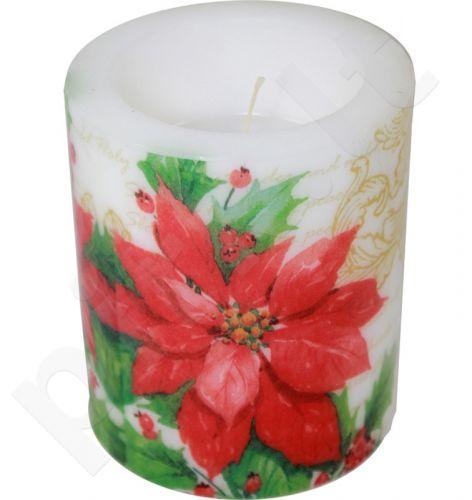 Žvakė Stylish Poinsettia White 91990