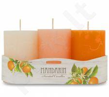 3 žvakių rinkinys 109775