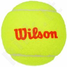 Teniso kamuoliukai Wilson Starter Orange Tball  Junior 48 vnt.