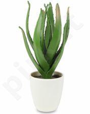 Dirbtinis augalas Alavijas 103307