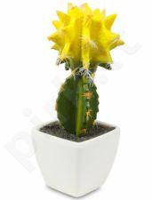 Dirbtinė gėlė Kaktusas 103297